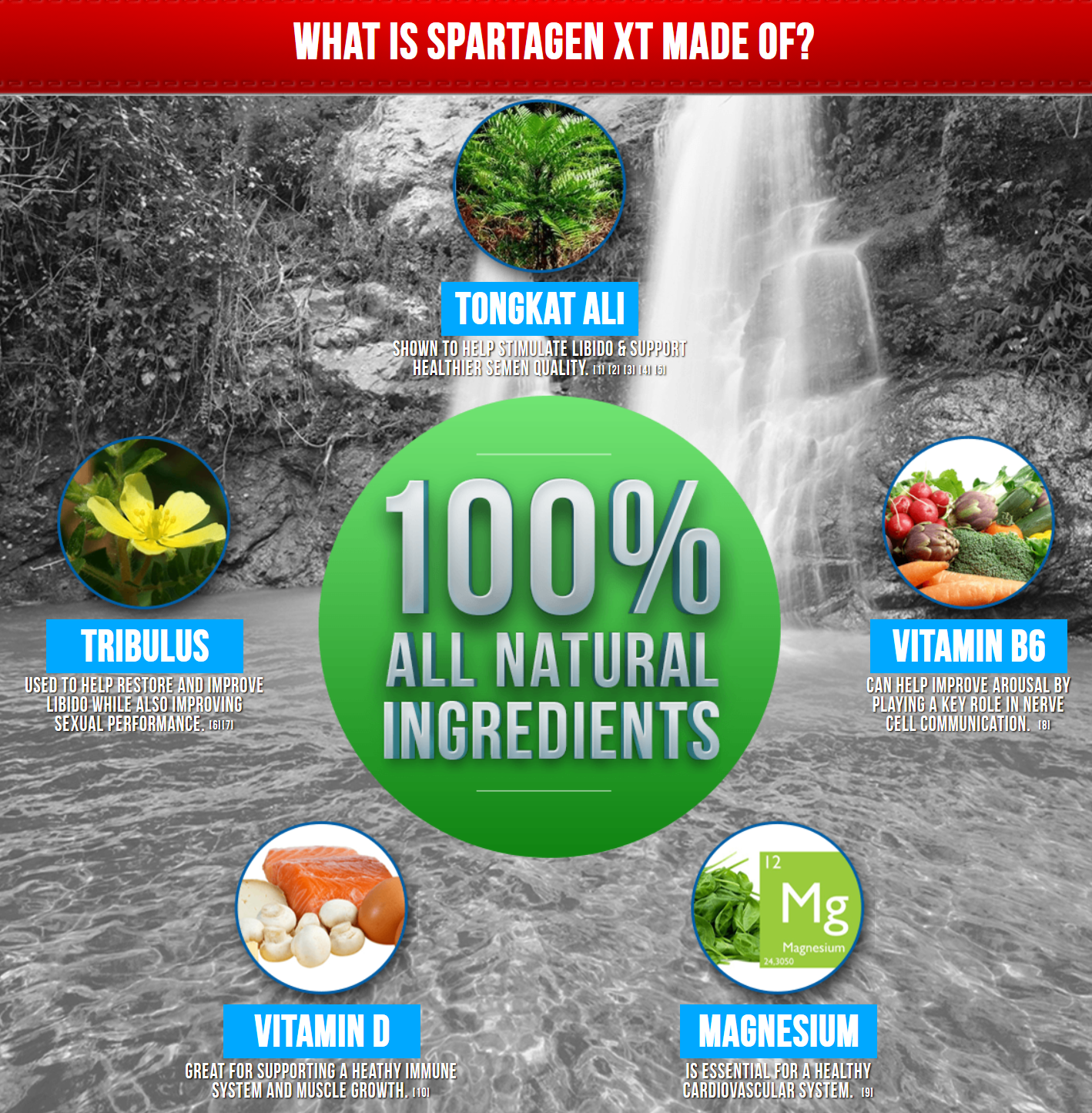 spartagen xt ingredients