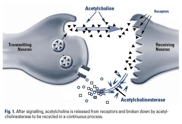how to take aniracetam and choline