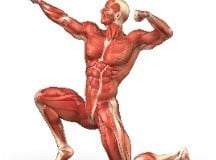 Muscle Review Guide