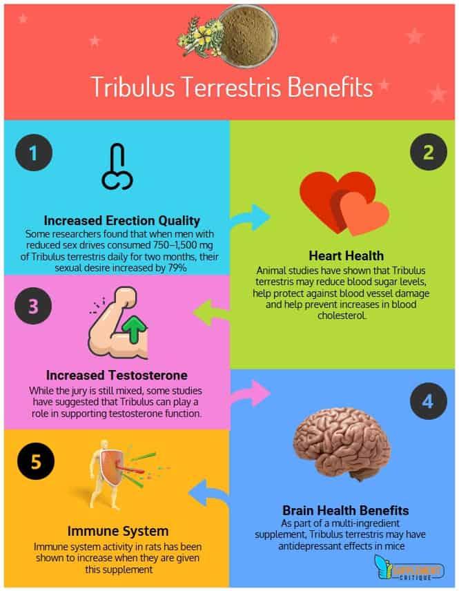 tribulus terrestris infographic