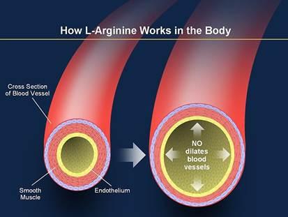 how l arginine works