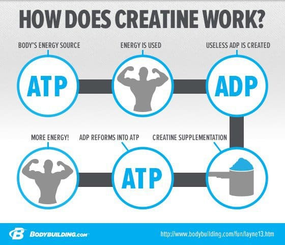 How creatine like MuscleTech Muscle Builder works