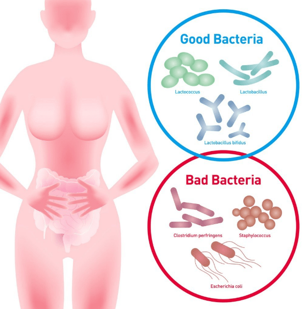 good bacteria vs bad bacteria