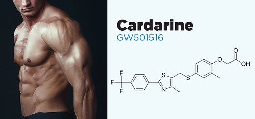 Cardarine Review (Update: 2018) | 13 Things You Need To Know