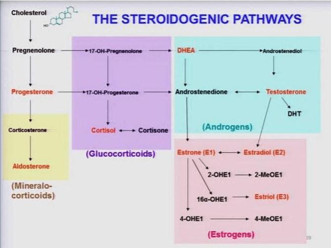Testosterone Foods Cholesterol Image