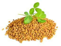 Fenugreek Review