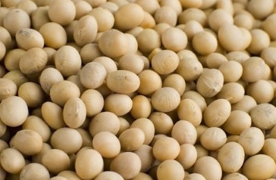 soy beans lower testosterone