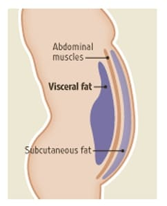 fat covers ab muscles