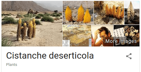 Cistanche Deserticola is an ingredient found in Gold Max Pink, a viagra pill for women