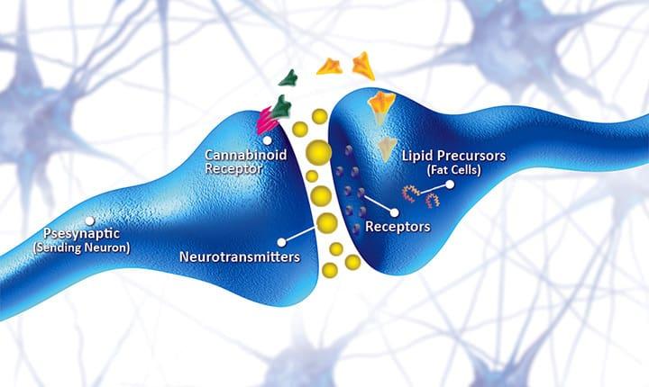 benefits of hemplevate