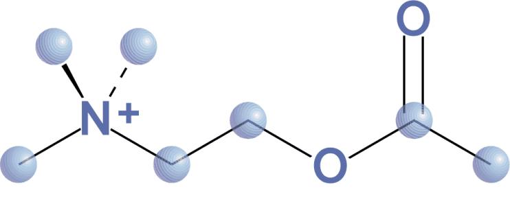 Alpha Lean 7 contains DMAE